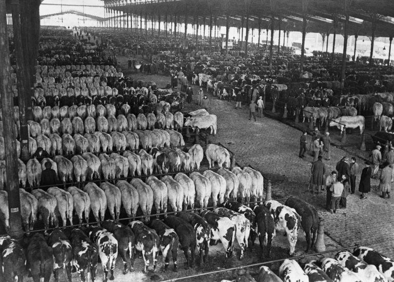 Halle aux boeufs - marché aux bestiaux